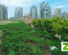 Всемирно известный проект: озеленение крыши библиотеки Ванкувера