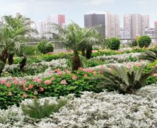 Высокая дренажная мембрана для садов бизнес-центра в Перу