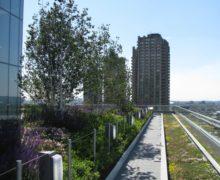 Ландшафтный дизайн крыши площадью 5,5 гектара в Лондоне