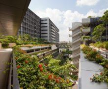 Последние исследования: растения на крыше изменят городской климат к лучшему