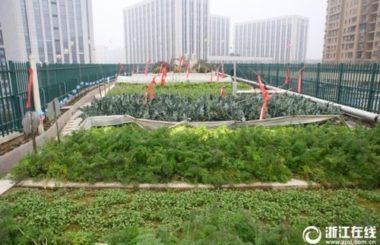 Технологии озеленения:эко-ферма на крыше школы в Китае