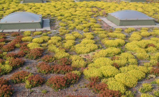 Технологичные системы озеленения крыш аэропорта Цюриха, Швейцария