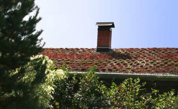Озеленение крыши бани