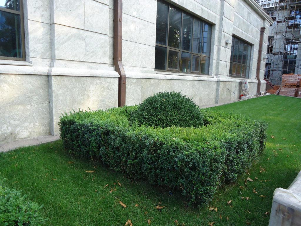 озеленение парковки