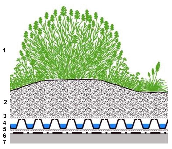 Душистые травы