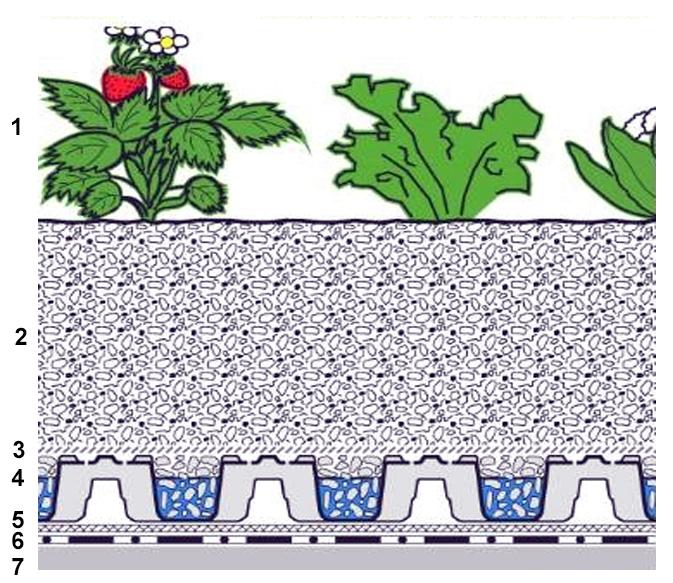 Фермы на городских крышах